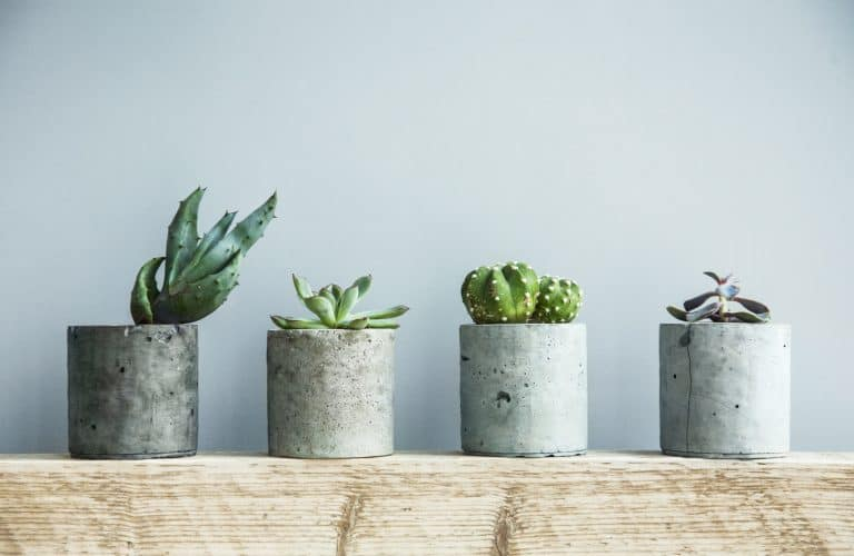 How Millennials Choosing to Raise Plants Over Kids and Pets is Affecting E-Commerce in the Home Improvement Space